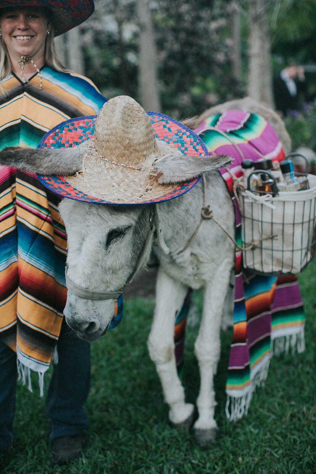 tequila donkey