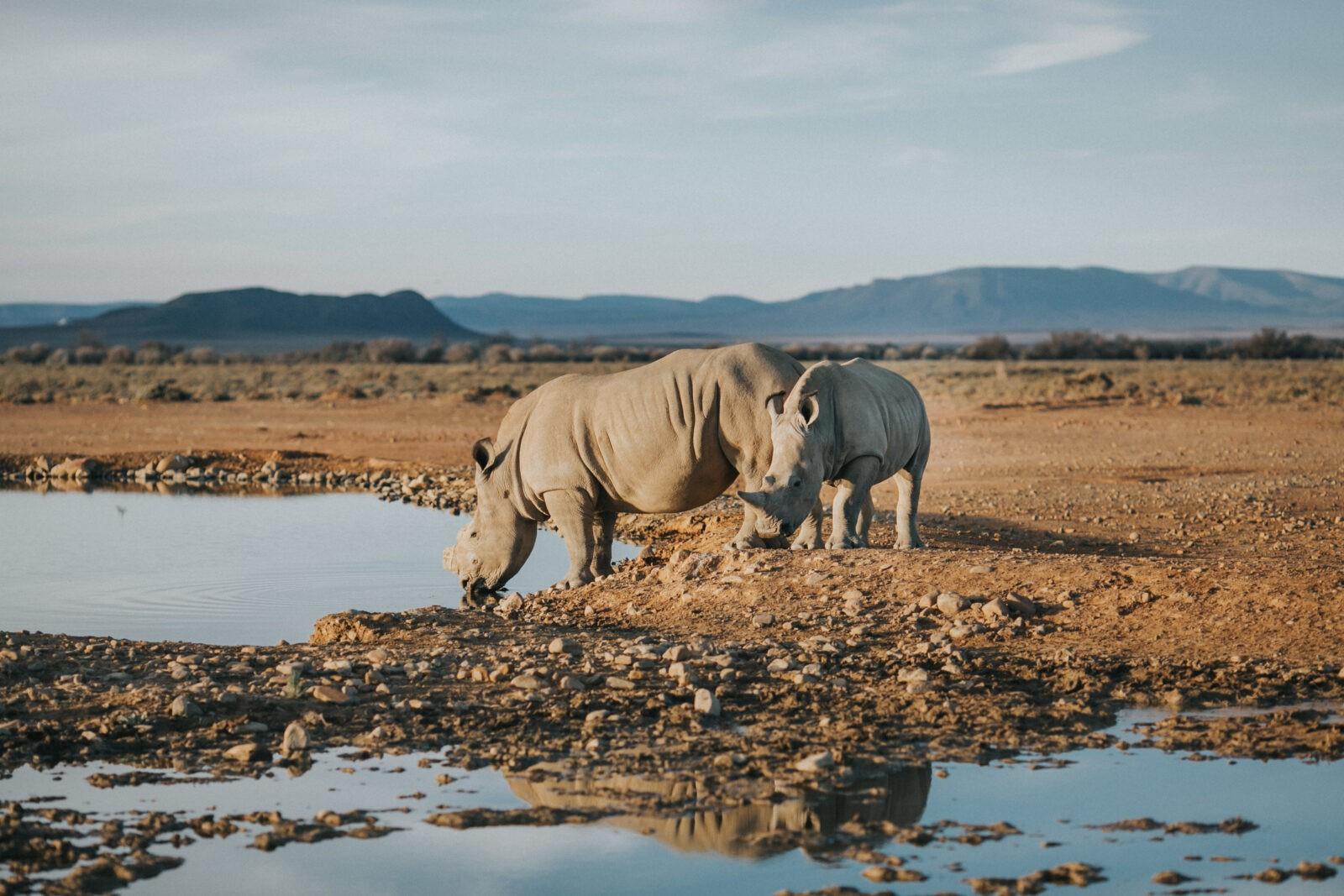 rhino safari south africa